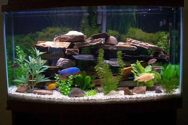 Baseball for you for What do you need for a fish tank